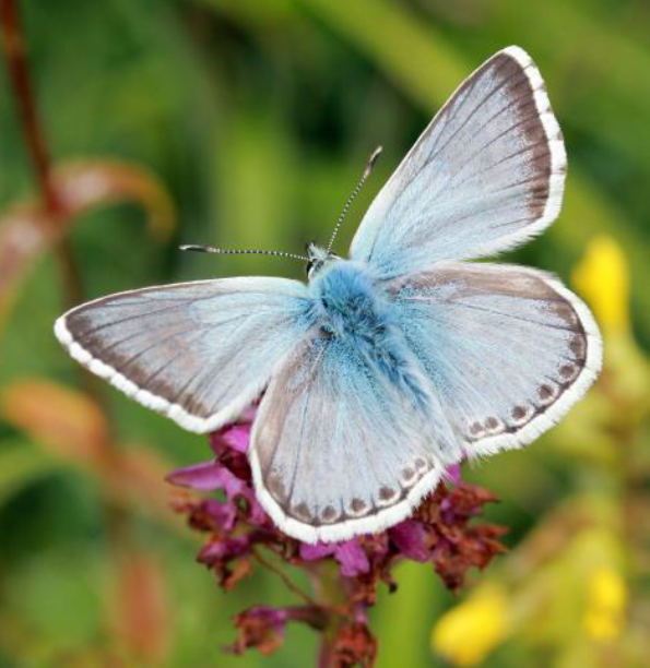 Forward to 2020: Biodiversity Action Plan Cover Image Butterfly