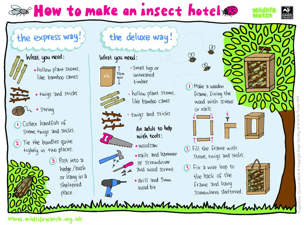 Insect Hotel - Wildlife Watch