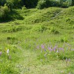 Aston Clinton Ragpits (Photo: Kate Titford)