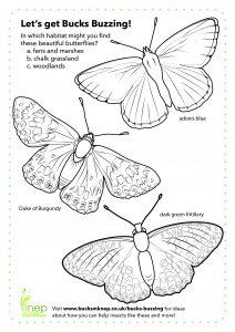 Butterfly colouring sheet (Bucks Buzzing)