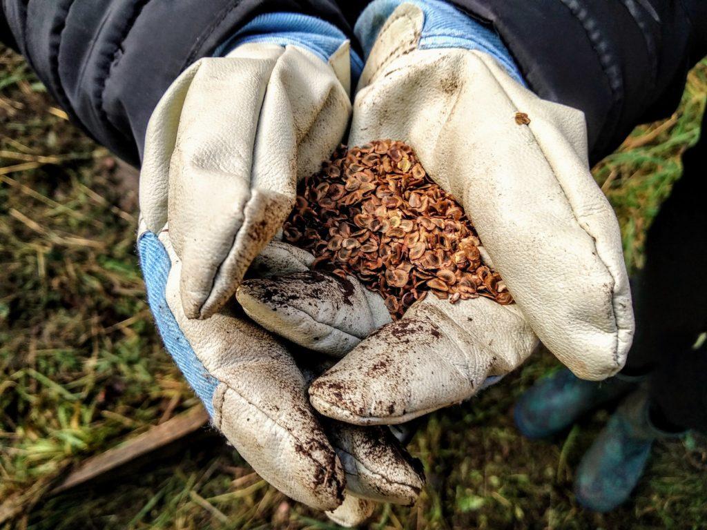 Bucks Buzzing Chiltern Rangers Forest School Seed Planting